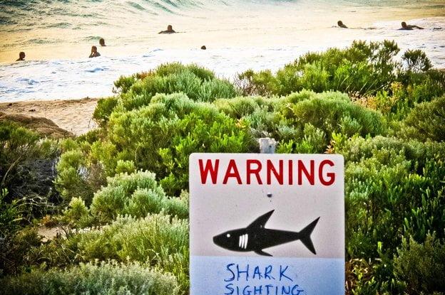 Twitter trở thành công cụ cảnh báo nguy cơ tấn công cá mập tại Australia-1
