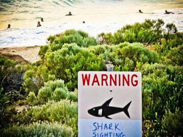 Twitter trở thành công cụ cảnh báo nguy cơ tấn công cá mập tại Australia